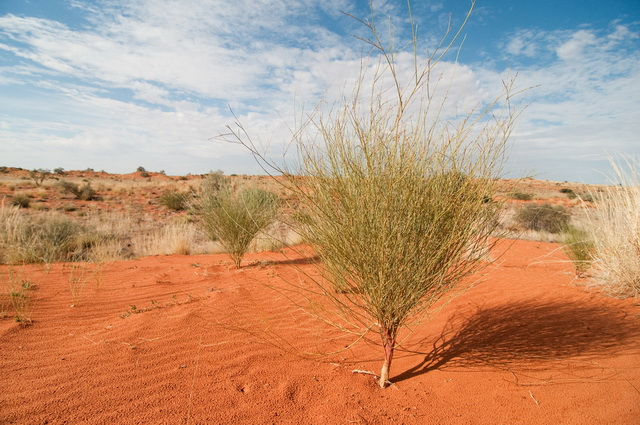 Image result for man pointing to cluster of bushes in the desert images